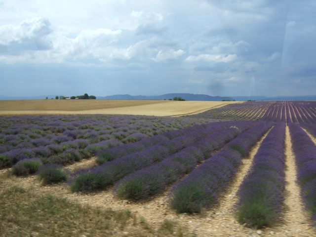 Provence12-455